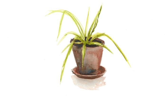 plante_aquarelle02